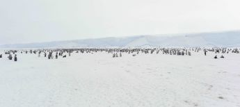Online view of the Polar Region: a penguin colony in Antarctica.