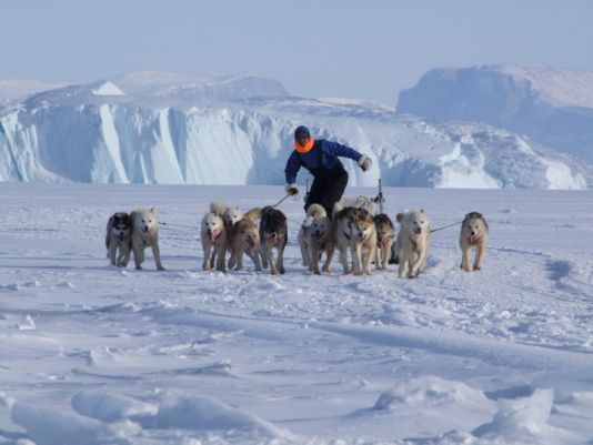A dog driver training his team for the Greenland Dog Sledging Championships.